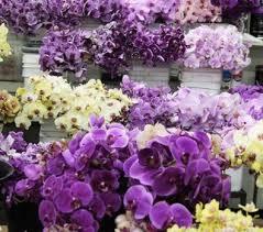 flower wholesale choice america flower wholesale the los angeles flower market