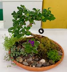 Dish Garden Ideas View In Gallery Succulents A Copper Trough This Method Is Trendy