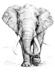 african elephant tattoo drawing photos pictures and sketches