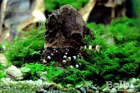 Aquascape Moss Nano Aquascape