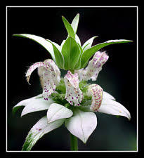 flower seeds ebay