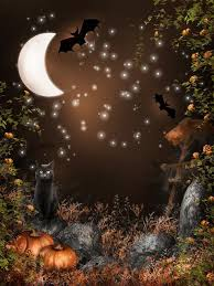 only 25 00 photography background night bats black cat