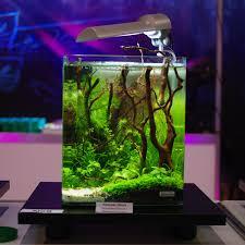 Small Tank Aquascaping Dennerle Nano Cube Aquarium Design Contest 2011 1st Prize Go