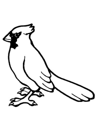 nothern cardinal bird coloring free printable coloring pages