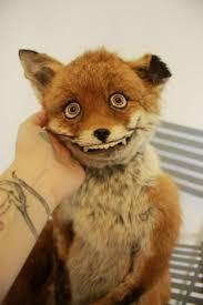Taxidermy Fox Meme - any taxidermist here my les paul forum