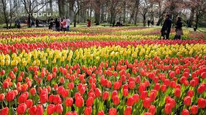 keukenhof flower gardens keukenhof spring gardens amsterdam video guide