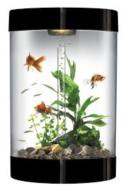 22 best besttropicalfishtanks com images on pinterest tropical