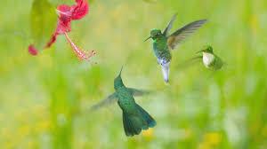 1920x1080 free desktop wallpaper downloads hummingbird download