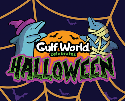 halloween u2013 gulf world marine park