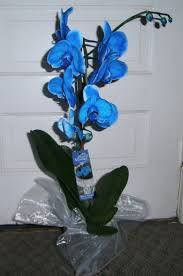 home depot black friday orchid growing and caring for the rare blue mystique orchid dengarden