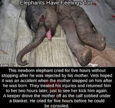 Elephant Meme - poor baby elephant meme by kid memedroid