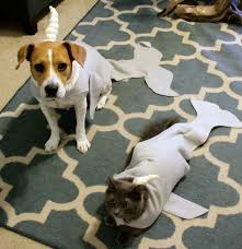 diy narwhal cat and dog halloween costume tutorial u2022 charleston