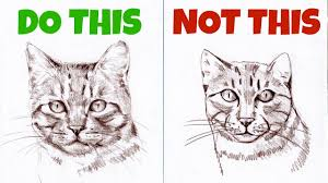 sketching animals how to draw a realistic cat youtube