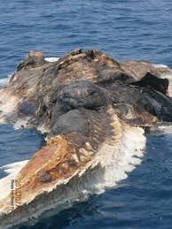 iranian vessel found a strange creature in the persian gulf the