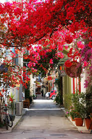 20 of the world u0027s most marvelous streets shaded by flowers and trees