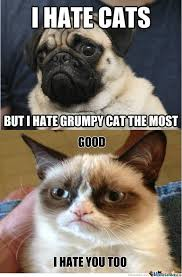 Grumpy Dog Meme - grumpy cat and dog grumpy cat meme and cat