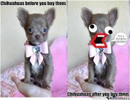 Meme Chihuahua - el chihuahua by gumball92 meme center
