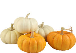 small pumpkins article trader joe s