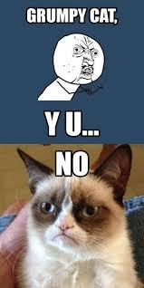 Grumpy Cat No Memes - y u no grumpy cat quote humor meme grumpycat meme y u no