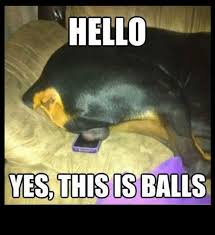 This Is Dog Meme - if you haven t seen the hello this is dog meme then this probably