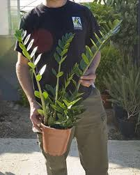 Plants For Dark Rooms by Top Fresh Air House Plants House Of Plants