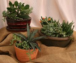 Indoor Container Gardening - indoor gardening create a container of succulents during wny