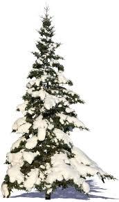 cut out snowy fir cut out plants vishopper