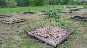planting fruit trees in clay soil youtube