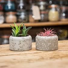 Concrete Succulent Planter Concrete Plant Pot With Succulents By Stupid Egg Interiors
