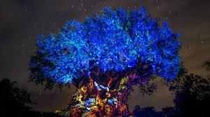 aerial drones tree of to celebrate pandora the world