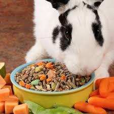 rabbit food pet rabbit food drs foster smith signature series