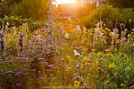 sunny perennial flower garden greenfuse photos garden farm