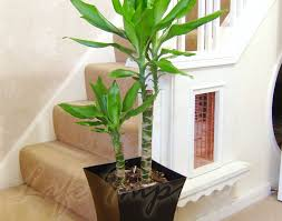 plant amazing indoor palm plants 1 large indoor office house