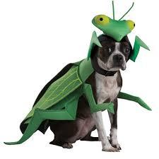 praying mantis animal planet pet halloween costume u2013 dog halloween
