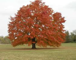 ornamental tree etsy