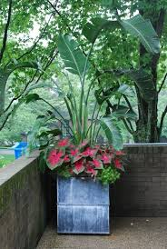 Tropical Potted Plants Outdoor - 815 best pots urns planters and containers images on pinterest
