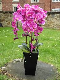 orchid plant artificial potted plant cm large pink orchid in a black wooden pot
