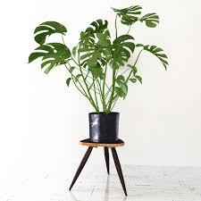 monstera 3d model in small plants 3dexport