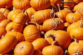 pumped about pumpkins 10 fun pumpkin facts thinkery
