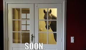 Soon Horse Meme - soon soon know your meme