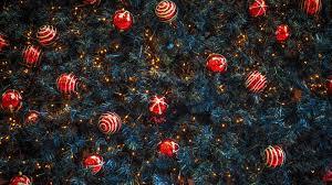 nature texture trees pine trees christmas tree lights
