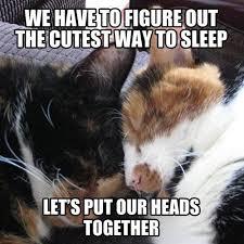 Monday Cat Meme - 9 magnificent meme monday cat memes petcentric by purina