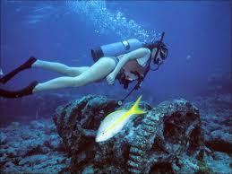 Washington snorkeling images Reddog diving key largo florida jpg