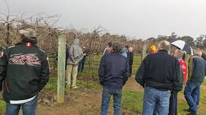 grape expectations for table grape covers in wa agriculture and food