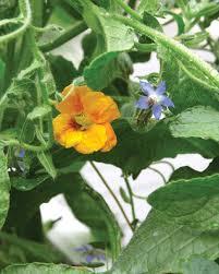 Easy Herbs To Grow Inside by Small Space Garden Ideas Martha Stewart