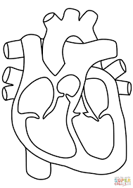 human heart coloring page free printable coloring pages
