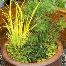 ornamental grasses for containers mike s garden top 5 plants