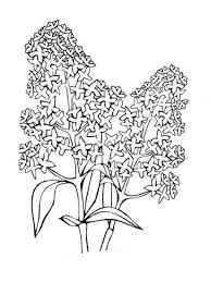lilac flower coloring pages download and print lilac flower