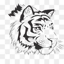 white tiger png images vectors and psd files free on
