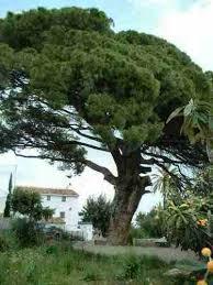 Glosario y propiedades mágicas de las plantas Images?q=tbn:ANd9GcR4GsH2zuRTfm4sOHPAP9hEZvIAOESVuGxz6N-FabtXMFnoO96g